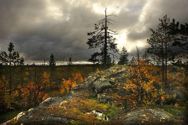 Рогатый бор. Сухой Наволок. Фото Виктора Дрягуева