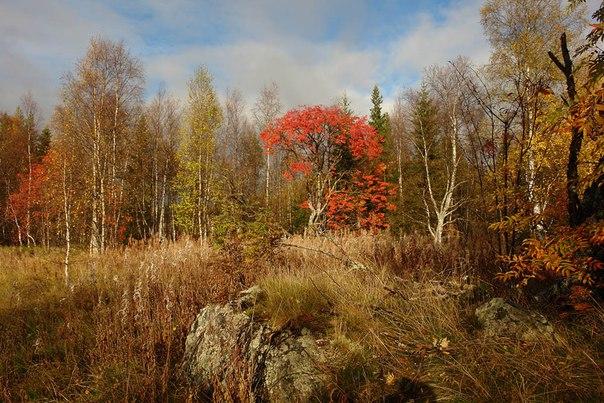 Осень в Поморье. Фото В. Дрягуева